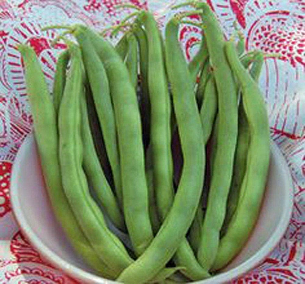 BEAN, KENTUCKY WONDER POLE GREEN BEAN, HEIRLOOM, ORGANIC 500+ SEEDS