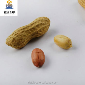 Raw peanuts in shell processing