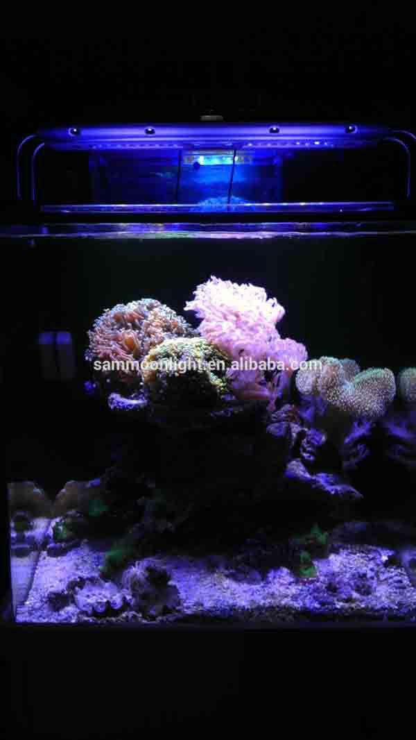8000k,10000k,16000k Marine Aquarium Ce Rohs Approved Led Light For ...