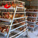 Layer Chicken Cage For Chicken Farm For Sri Lanka