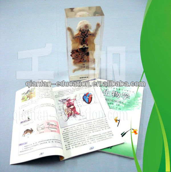 Qianfan Frog Skeleton Teaching Embedded Specimen School Supplies