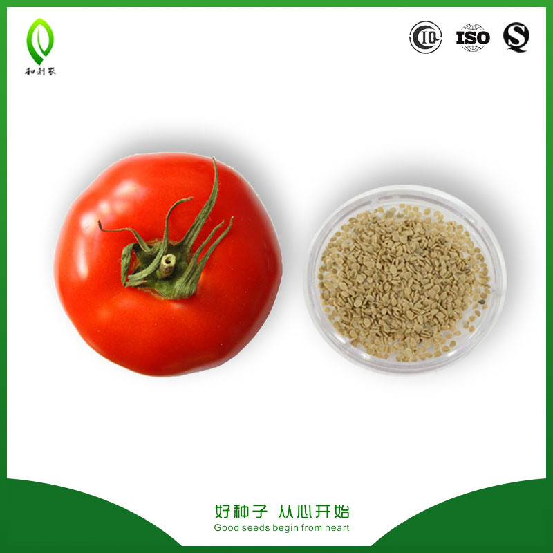 Unlimited growth hybrid tomato seeds Israel