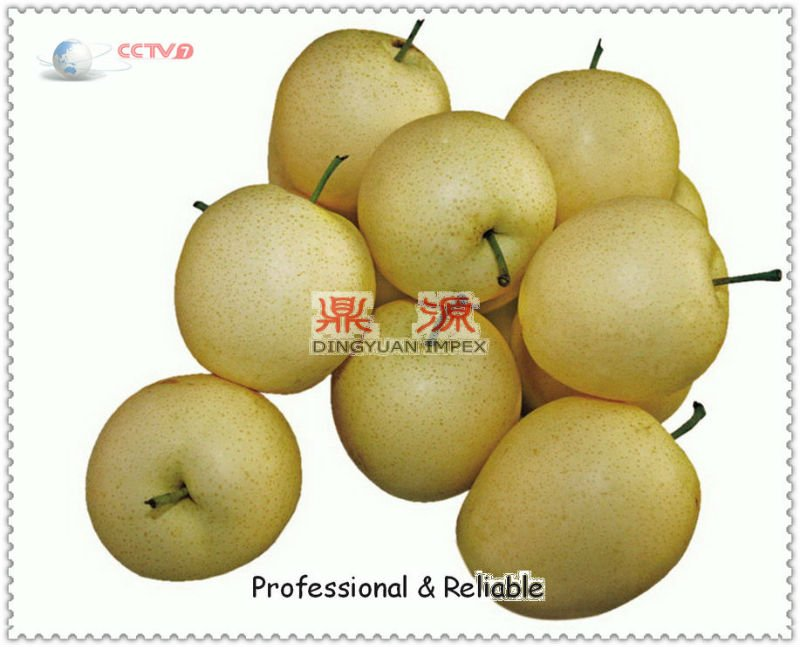 China apple pear