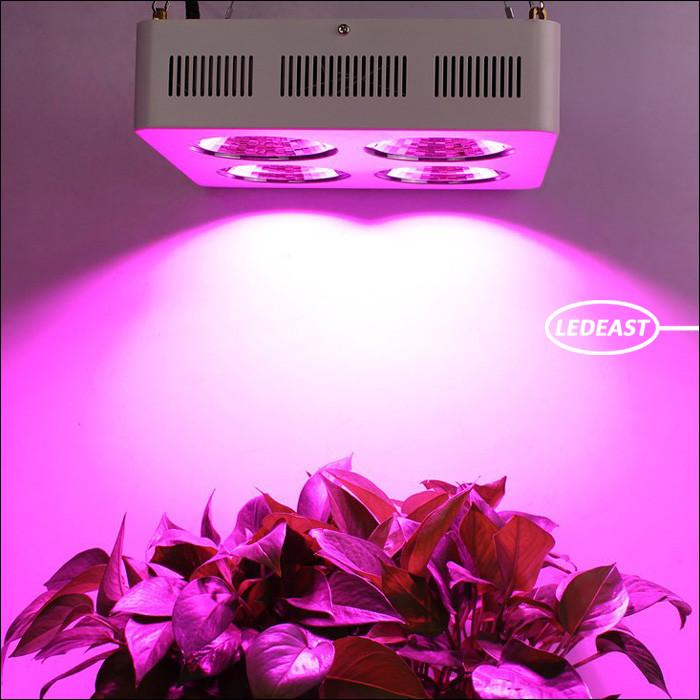 full spectrum cob led 800 watt led grow light led growth. Black Bedroom Furniture Sets. Home Design Ideas