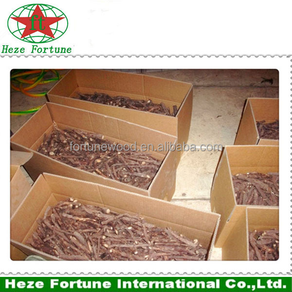 Asia native species paulownia Shantong roots cutting for planting