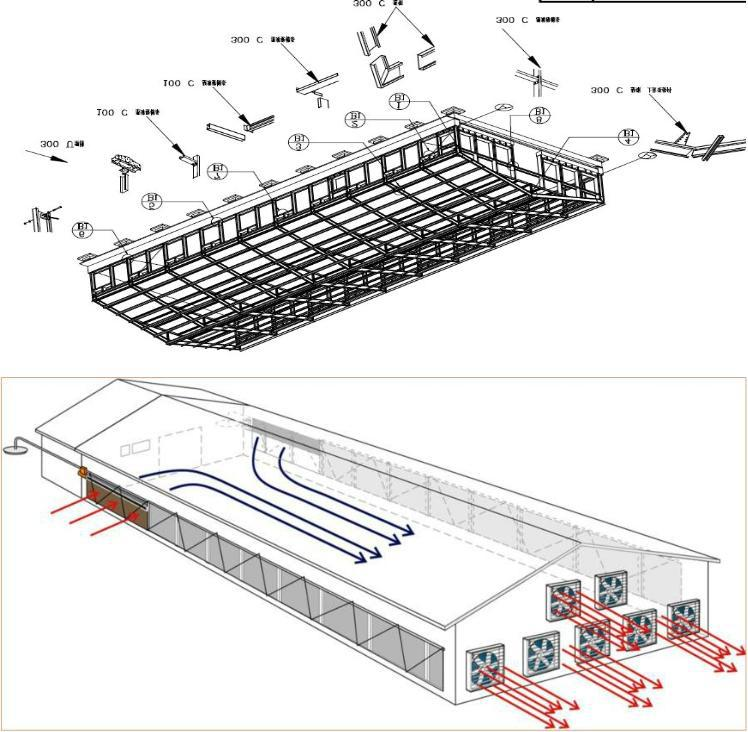 Control Low Cost Poultry Shed/farm For Broiler Layer