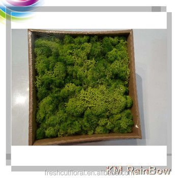 Beautifu Decorative Moss And Artificial Live Moss Fake Moss