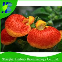 High breed flower seed, slipperwort seeds, calceolaria seeds for growing