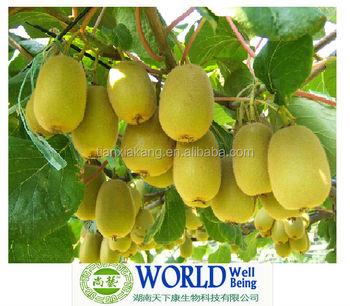 100 Pure Garcinia Cambogia Extract Plant Extract Garcinia Cambogia