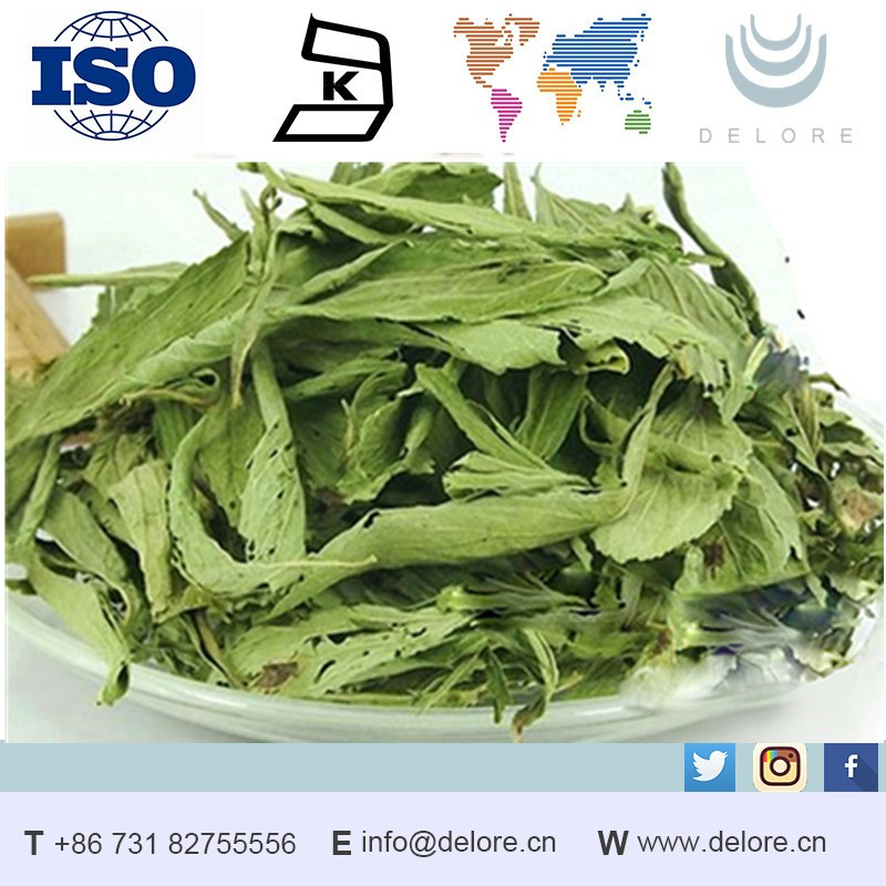 Supply Natural Stevioside 90% powder / buyers of stevia extract powder