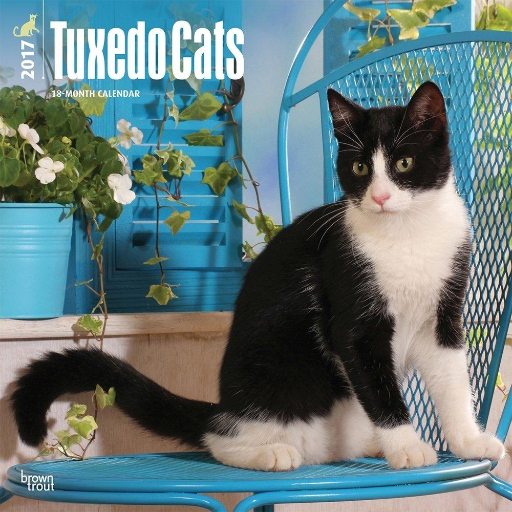 Tuxedo Cats Calendar 2017 ~ Deluxe Wall Calendar (12x12)