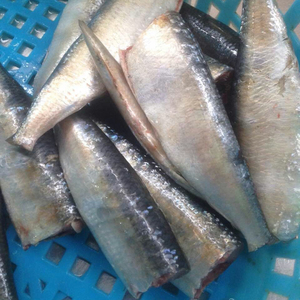 Frozen sardine HGT for canning