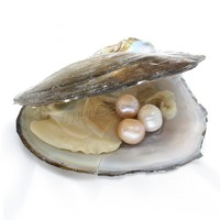 High quality freshwater pearl oyster in vacuum packed