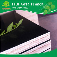 Hard wood film faced plywood plywood wood /russian birch plywood