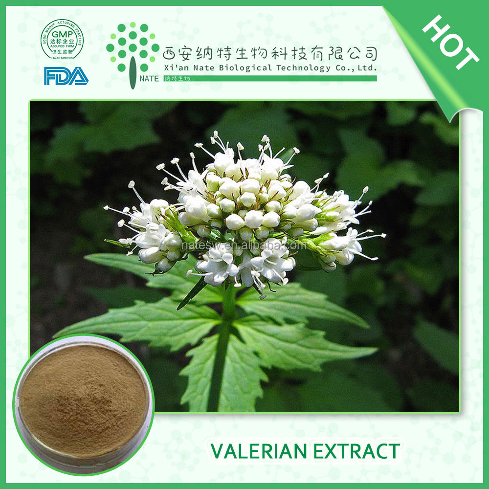 HIGH quality product Valerianae Officinalis Root P.e. Valeric Acid 0.4% FREE sample