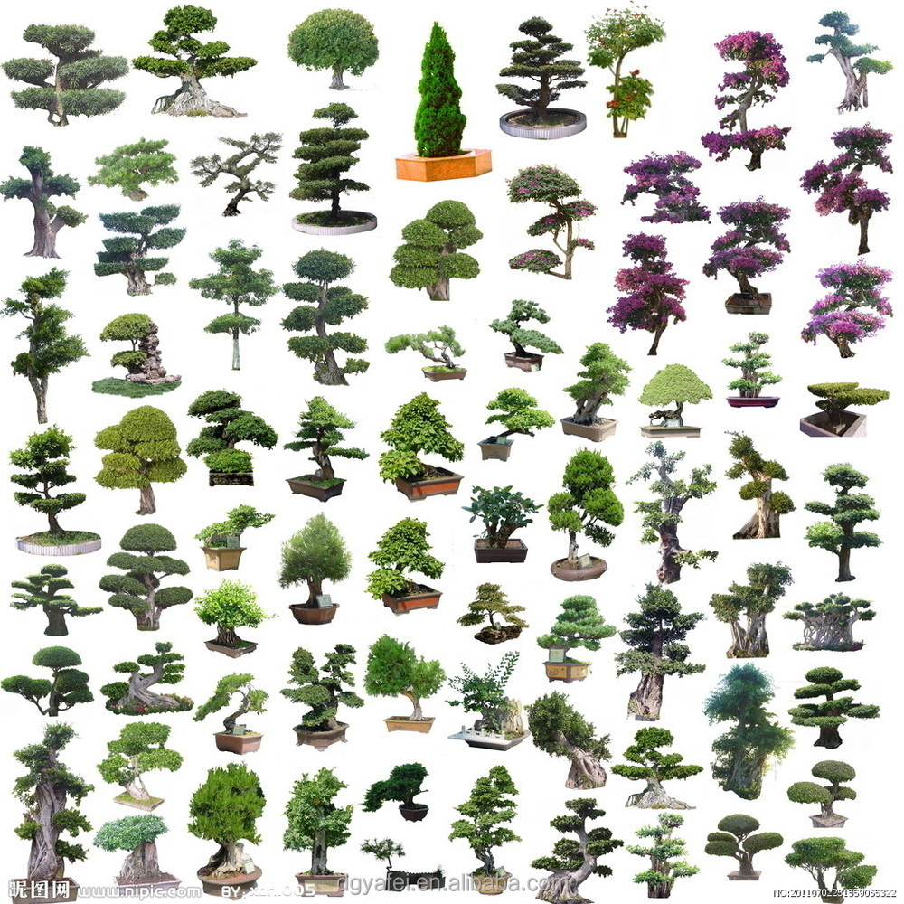 Different types of plants and trees outdoor artificial for Different kinds of plants