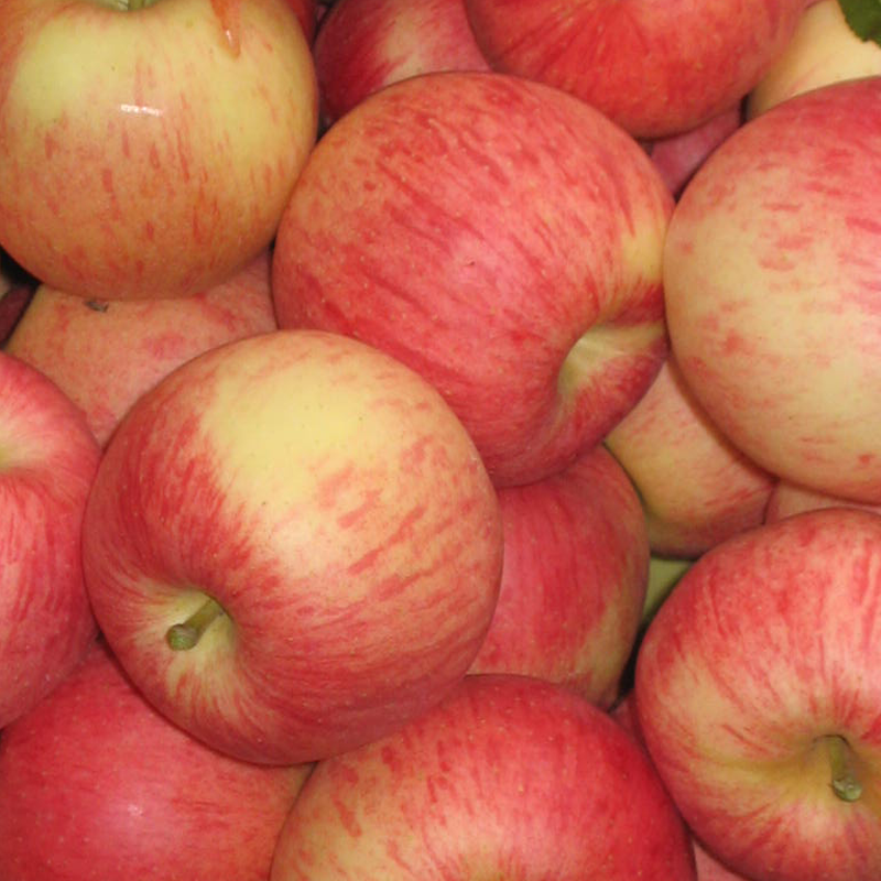 Hersteller preis top guality frische royal obst gala apple