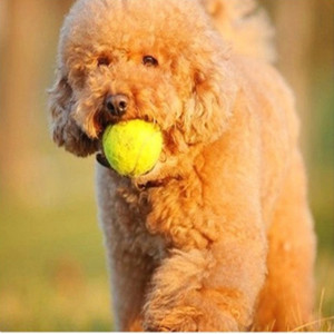 BB call Squeaky dog tennis ball / dog balls tennis