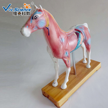 Animal Horse Anatomy Acupuncture Model