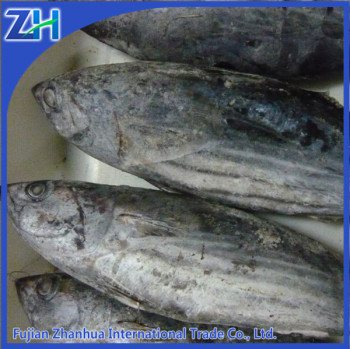 Whole round frozen skipjack bonito tuna fish iqf sale for Whole foods fish on sale this week