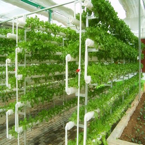 Agricultural Farm Hydroponic Growing Systems Greenhouse