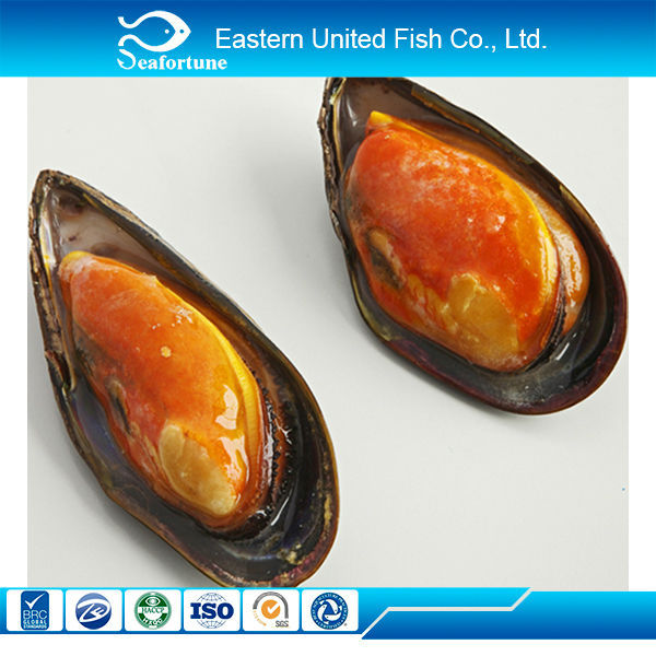 new arrival frozen oyster meat