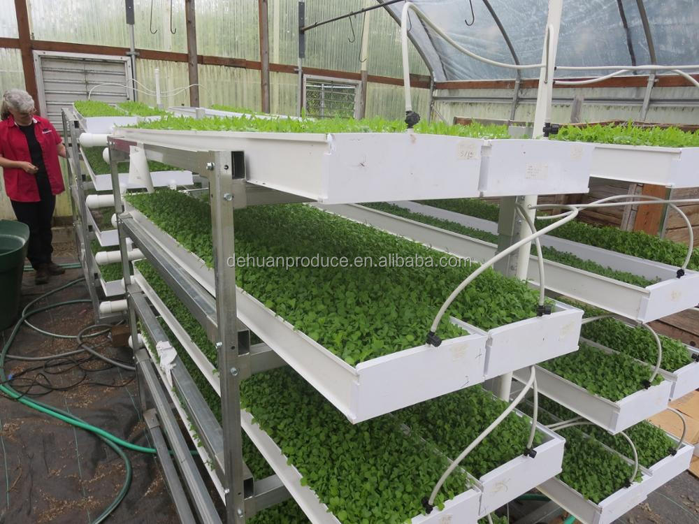 Hydroponic microgreens growing system buy hydroponic for Best growing medium for microgreens