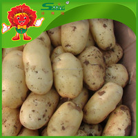Chinese potatoes sell directly from farmer lowest price in market