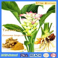 Curcumin powder /Health care Supplement/Organic Natural Turmeric Root Extract 95% Curcumin