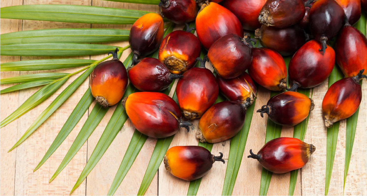 Supply 100% pure natural palm oil