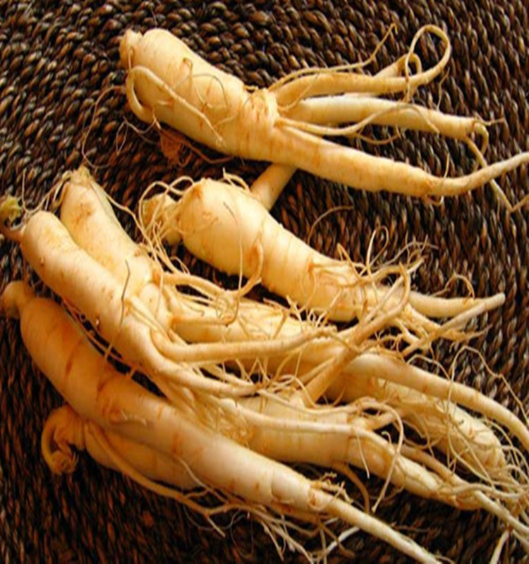 What is korean ginseng good for
