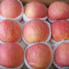 Shandong Chinese fresh apple for hot sale
