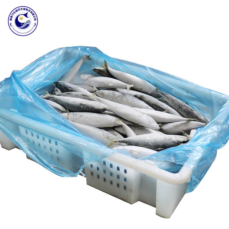 Frozen Food Pacific Mackerel Frozen Mackerel Sea Fish