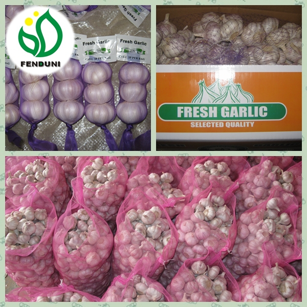 2017 wholesale garlic wholesale garlic buyers wholesale garlic price