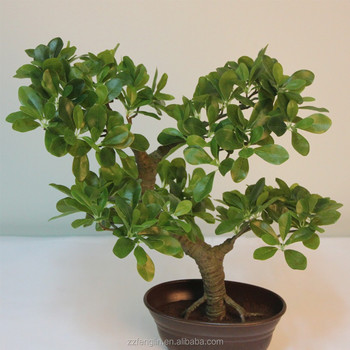 all kinds of artificial wide coffee bonsai old cheap mini artificial bonsai tree for indoor decoration