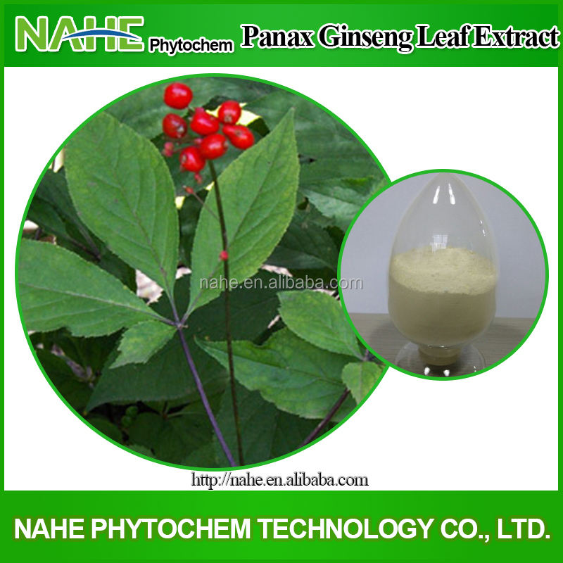 100% natural 95%UV pure white Ginseng Root Extract /Ginseng Leaves Extract