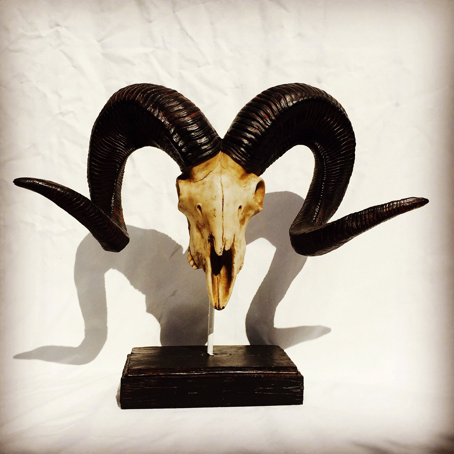 The Rustic Big Curly Horn Ram Skull Sculpture, Trophy Style, Natural Tones, Bone and Wood of Hand Cast Designer Polyresin, Float Mounted, Beveled Base, 19 ¾ W x 18 1/8 H Inches, By Whole House Worlds