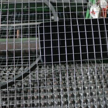 2X2 Wire Mesh | 1x1 2x2 3x3 4x4 Galvanized Welded Wire Mesh Low Price 4x4