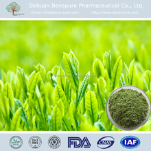 Factory supply high quality Tea Polyphenols GTP 50%~98% USP/EP/CP/BP CAS No. 989-51-5 HPLC Green Tea Extract