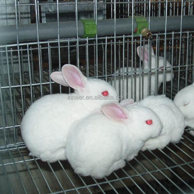 Finden Sie Hohe Qualität Kaninchen Zuchtkäfige Hersteller und ...