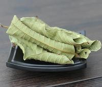 Dried pure clean guava leaf tea