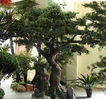 2014 Sj Ct055 High Quanlity Pine Tree Plastic Welcoming Pine Tree For Hotel Christmas Party Decoration Xmas Greeting Pine Tree Buy Christmas