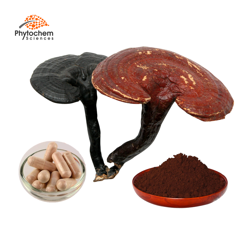 300 mesh super reishi mushroom <strong>powder</strong> factory wholesale