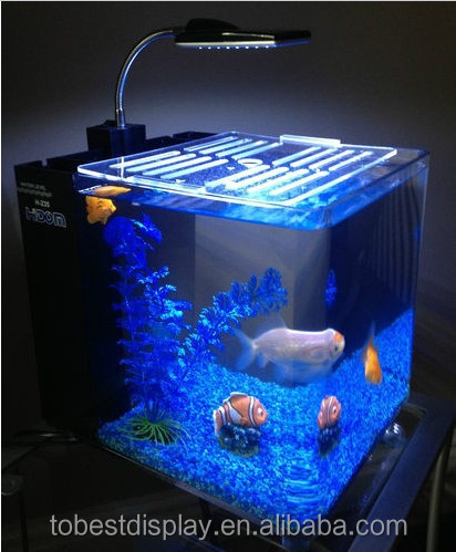Fashion Design Aquarium Fish Exporter In Kerala