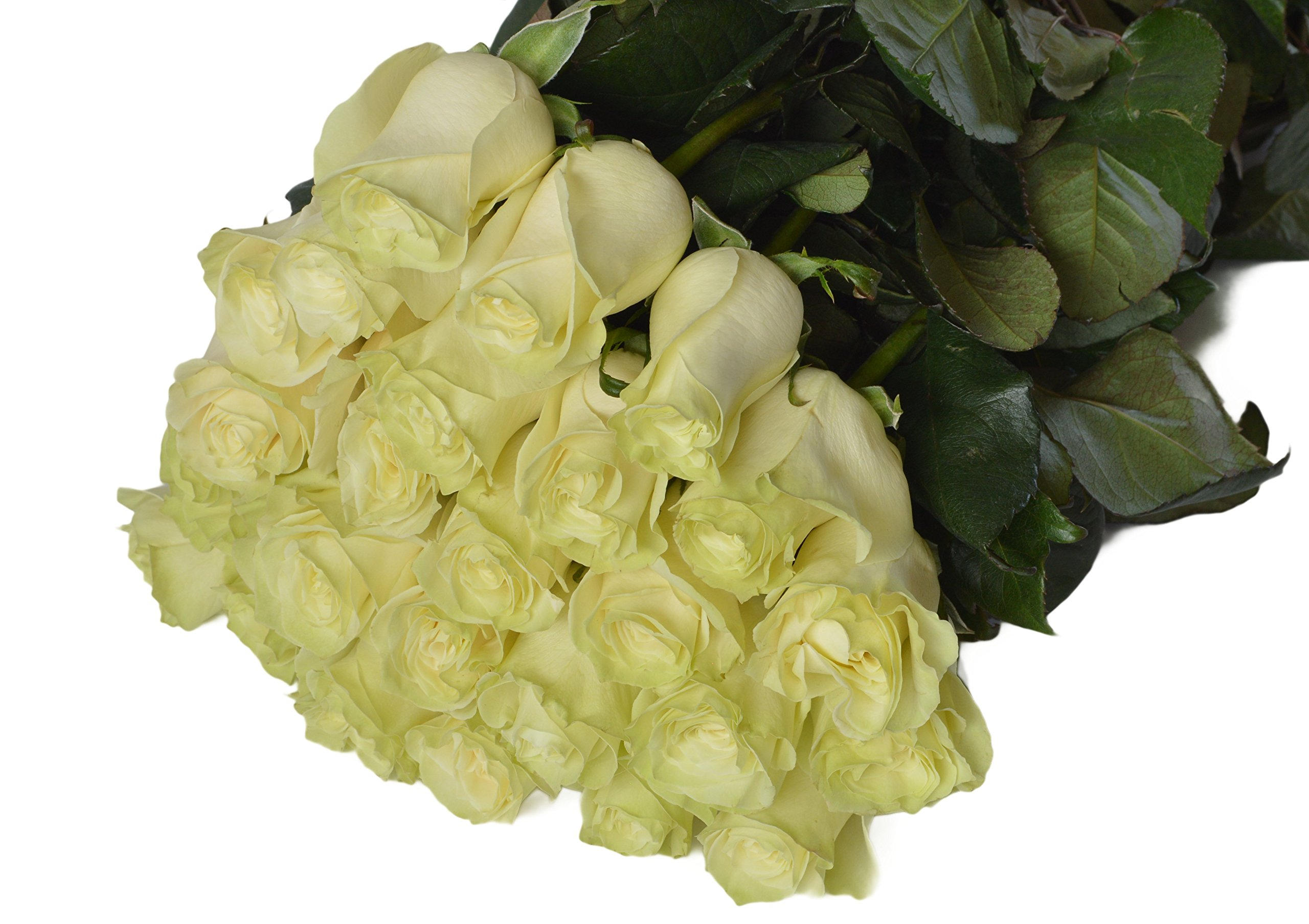 Cheap Flowers Pictures White Roses Find Flowers Pictures White