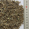 high quality hemp seed for sale