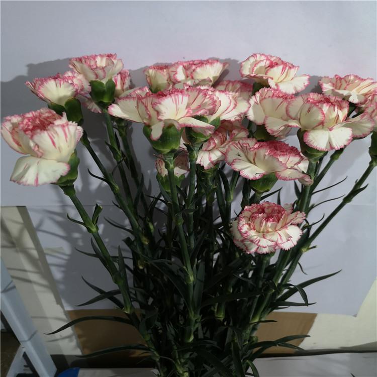 Срезанные цветы гвоздика купить минск, пионов доставкой спб