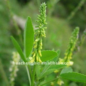 100% Natural Melilotus officinalis Extract(Coumarin 5%)