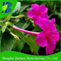 Garden flower wishbone bush seeds for cultivation