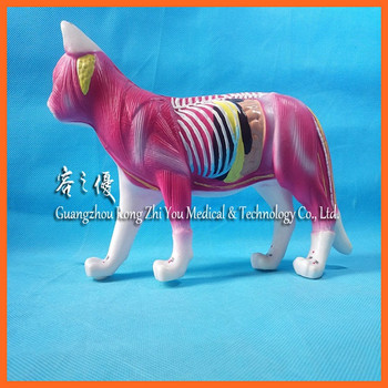 R190126 Teaching Use Animal Anatomy Model Of Acupuncture Cat - Buy ...